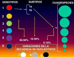 genotipsVIRUSHEPC